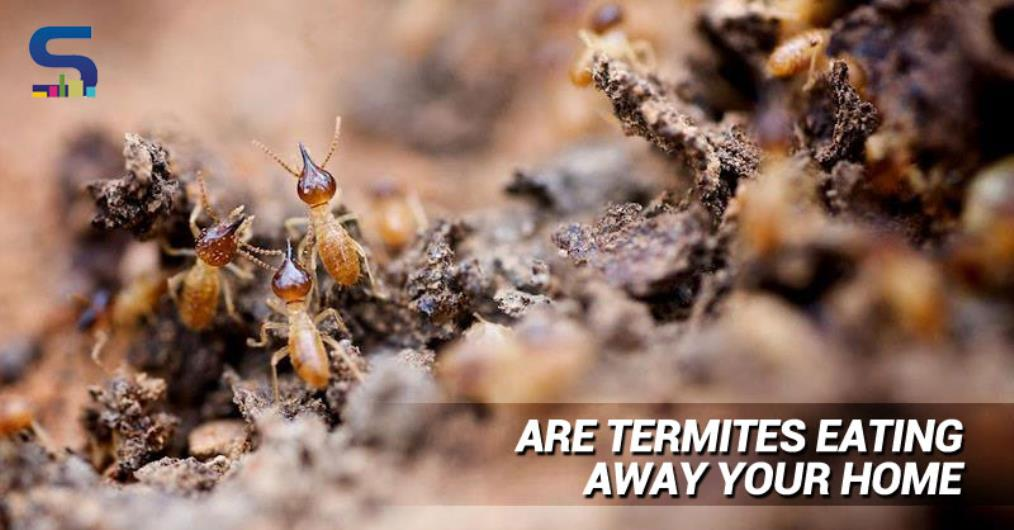 At some point or the other, we have all been victims of these tiny creatures called termites in our homes and even office. They eat away our favaourite and prized pieces of furniture and turn them into dust havens.
